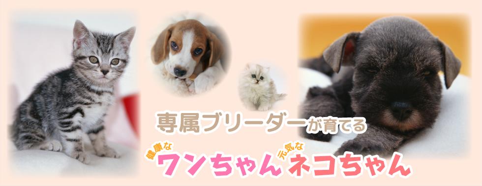池田市、ペット、子犬、子猫